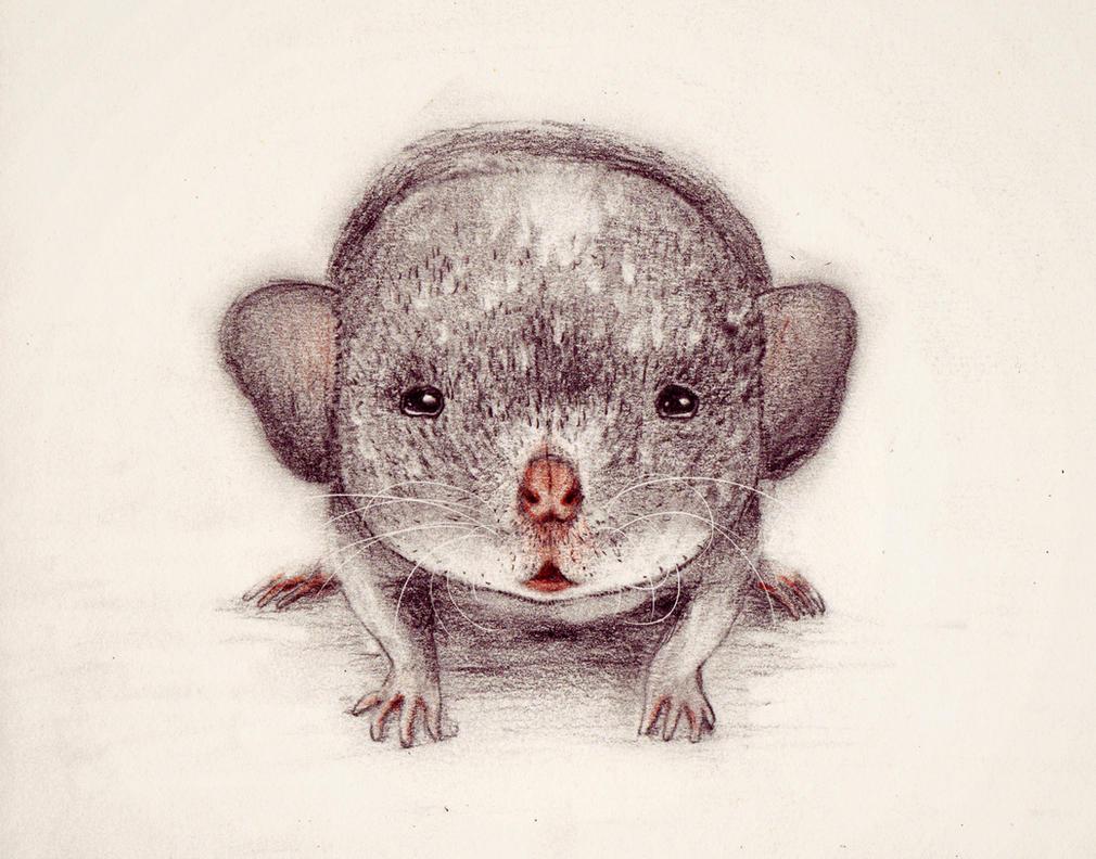 baby rat by CheekyCzekaj