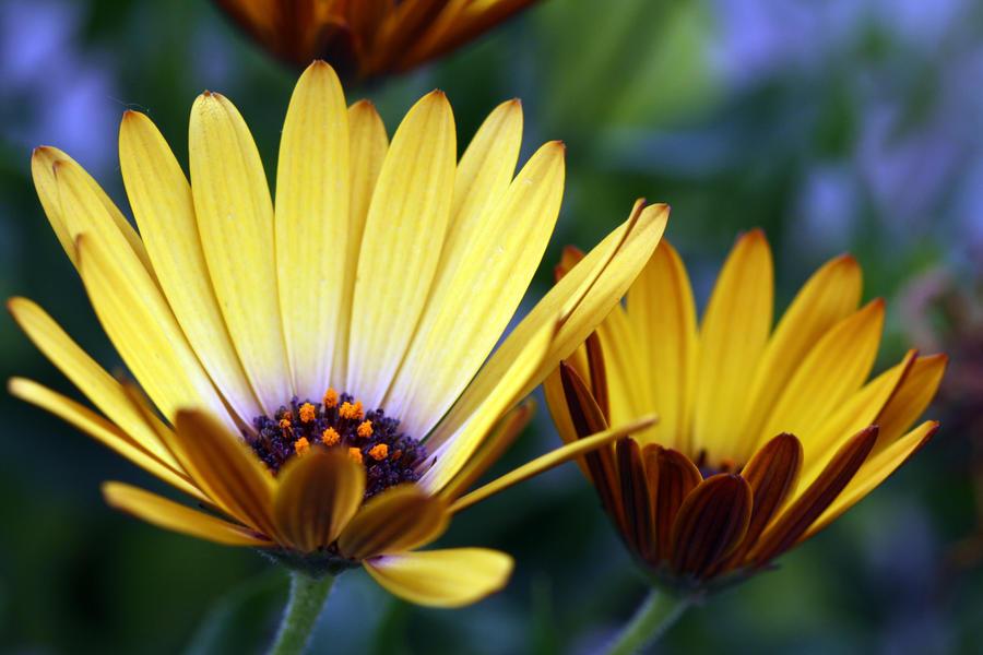 Flowers 49 by MegMarcinkus