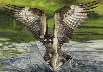 Tickle Bird by dwaynerjames