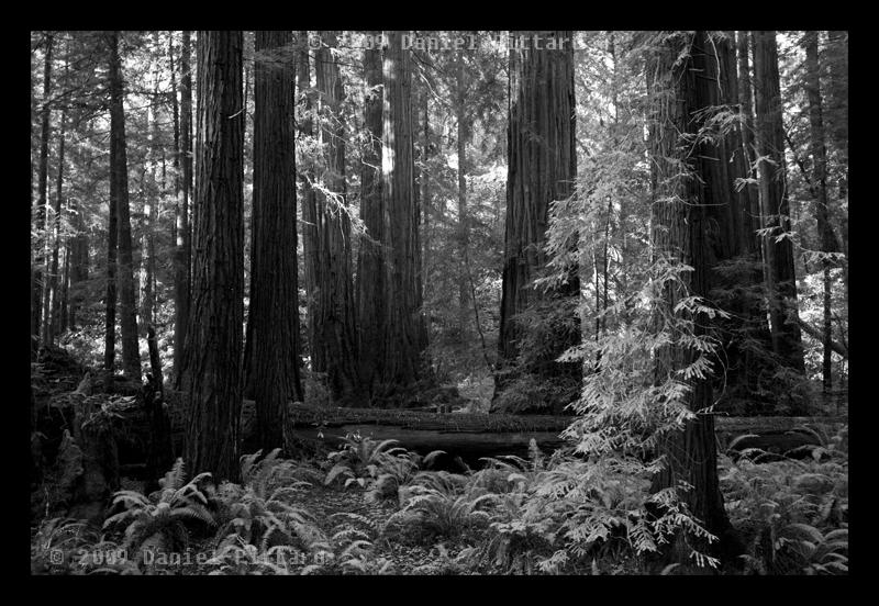 Muir Woods by dspittard