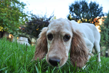 puppy by voiceofthemysteron