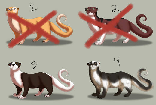 St Madai's Otter ADOPTABLES: 2/4 AVAILABLE