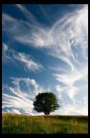 summer breeze by one-shot-below