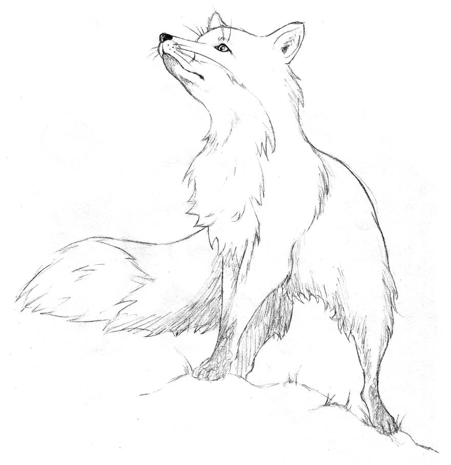 Fox Sketch by KTechnicolour