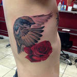 Bird and rose Tattoo by Mike Ashworth