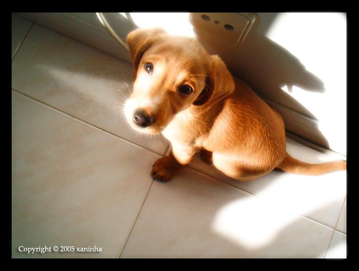 My Lovely Dog Star by xaninha - Ama Sen �ok Masum Bak�yosun Be Yavrum :D