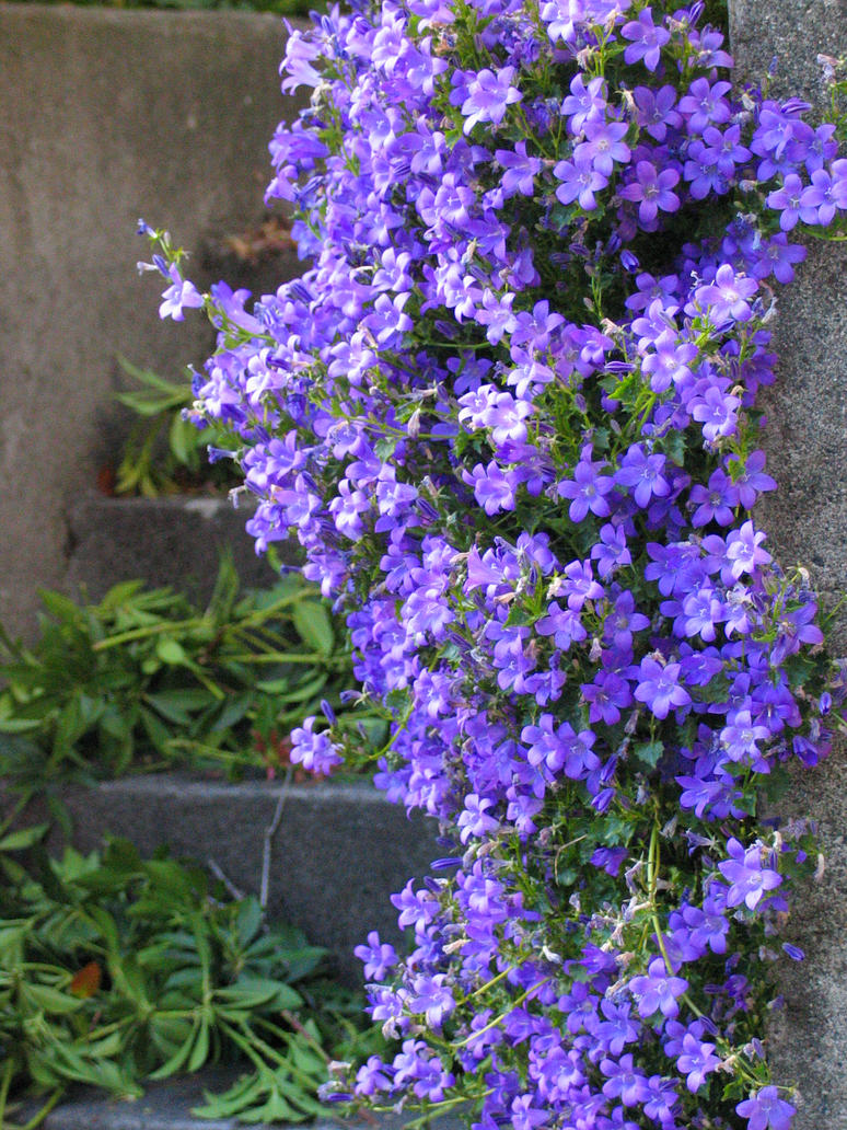 Flowers on the stone wall by aesoph on deviantART