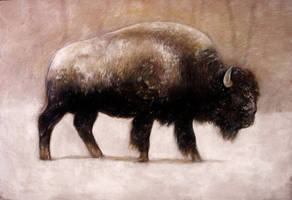 Bison Study by haskellot