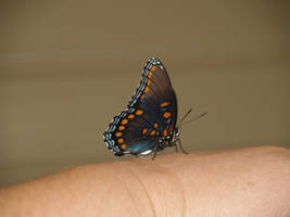 same butterfly by Irie-Stock