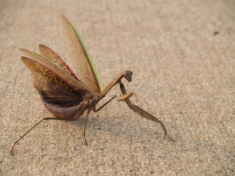 getting tired of the mantis?