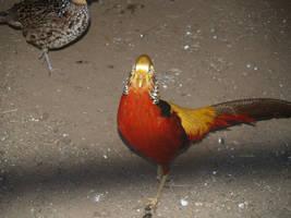 a.... bird by Irie-Stock