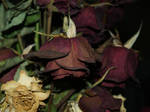 Dead Rose 4