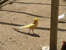 Golden bird by Irie-Stock