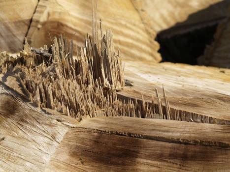 Wood texture2