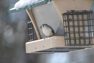 Bird eating a seed at feeder