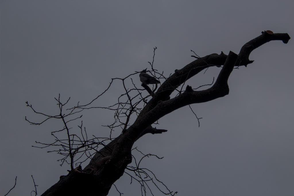 Nevermore by kuleli5153