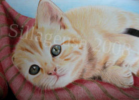 kitten: coloured pencils