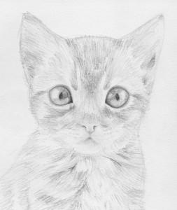 Sillageuse's Profile Picture