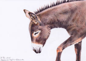 Donkey (colour pencils) by Sillageuse