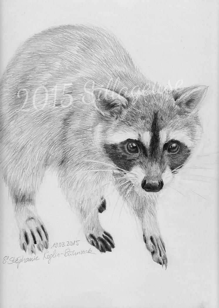 Raccoon (in celebration of 100 fans on facebook!)