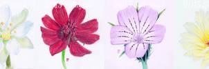 endangered flowers
