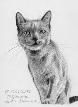 #001: cat