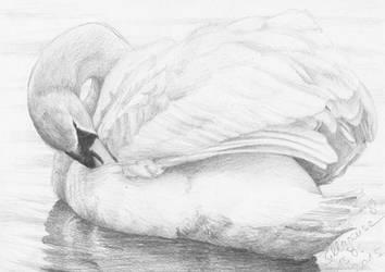 #003: swan
