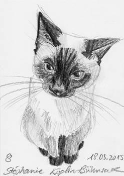 #006: cat (sketch)