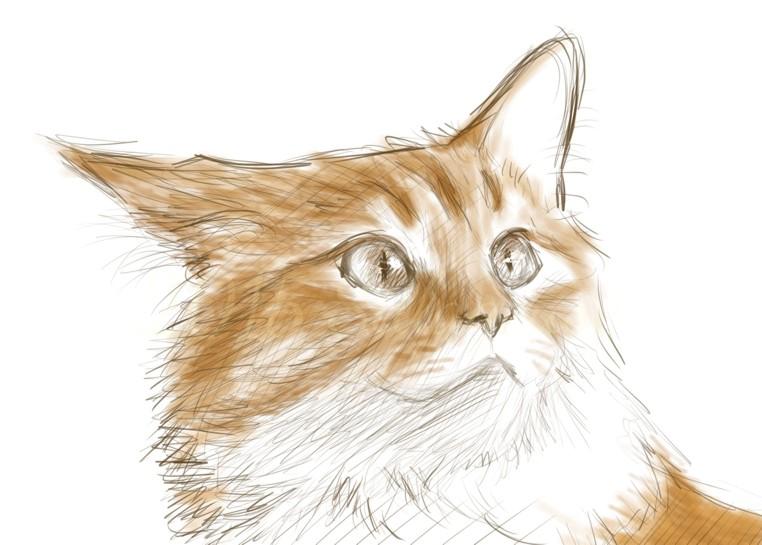 Exploring digital art (coloured sketch): cat