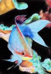 #010: fish