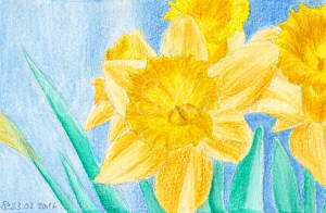 watercolour daffodil by Sillageuse