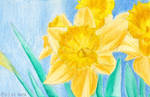watercolour daffodil