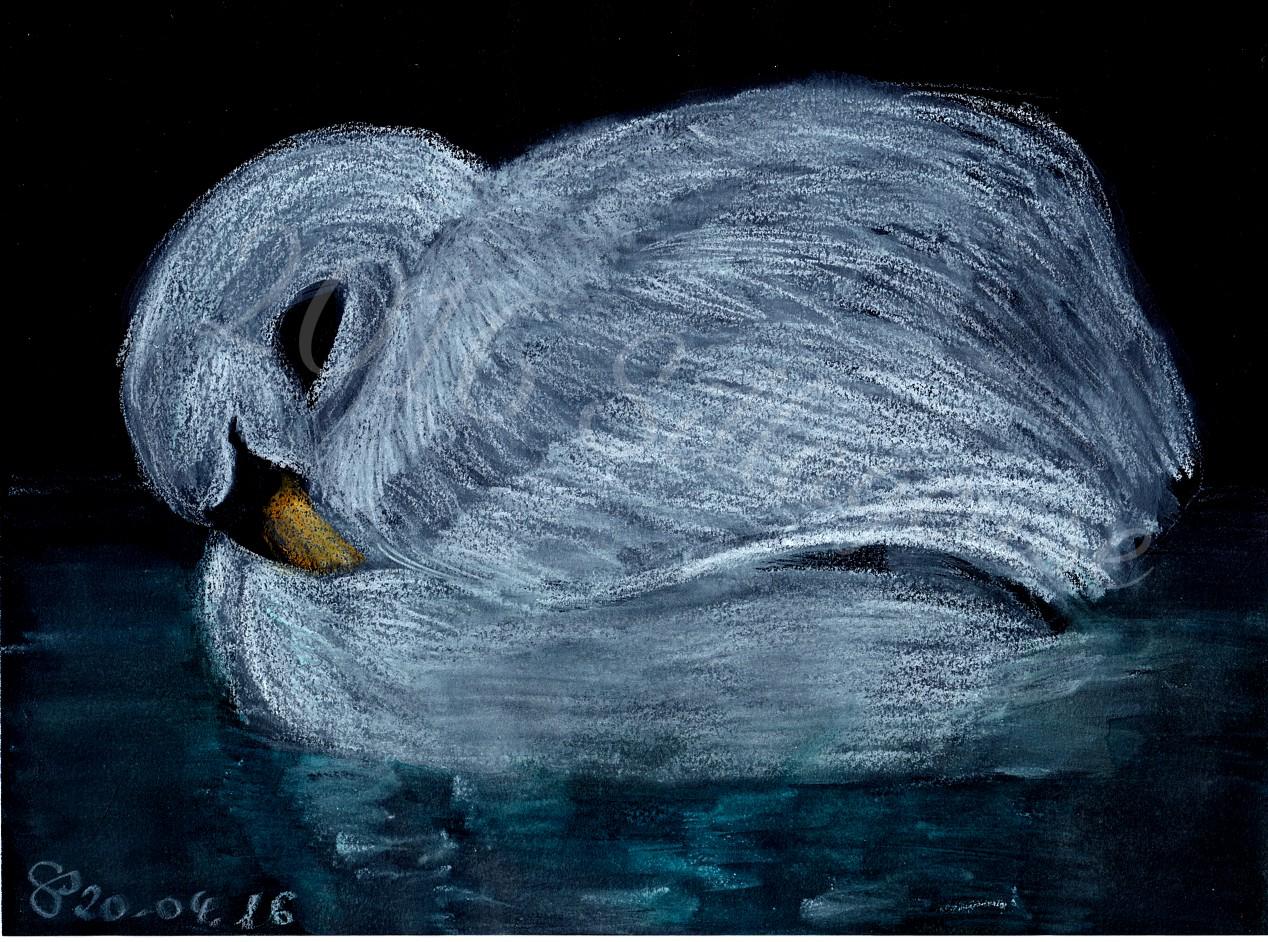 White swan on black paper