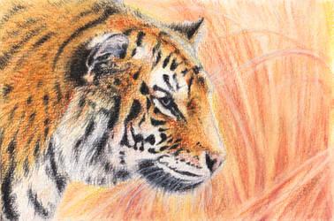 Tiger (watercolours)