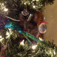 Penny in the Tree 3
