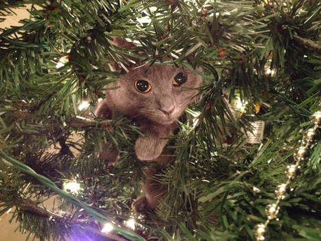 Penny in the Tree 4