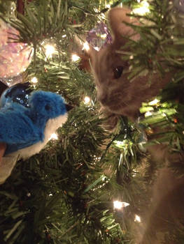 Penny in the Tree 5
