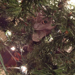 Penny in the Tree 6
