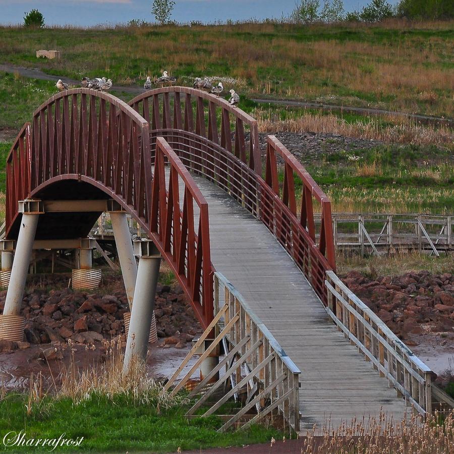 Bridge of Gulls by Brian-B-Photography