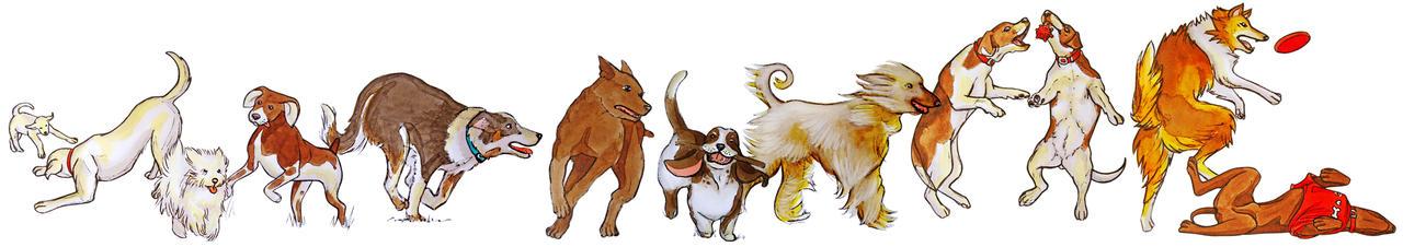 Dogs study 2