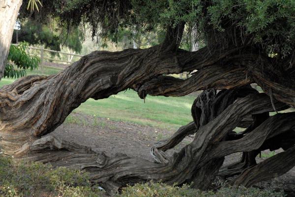 Twisted Trees 05
