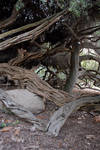 Twisted Trees 10