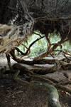 Twisted Trees 11