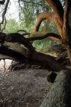Twisted Trees 12