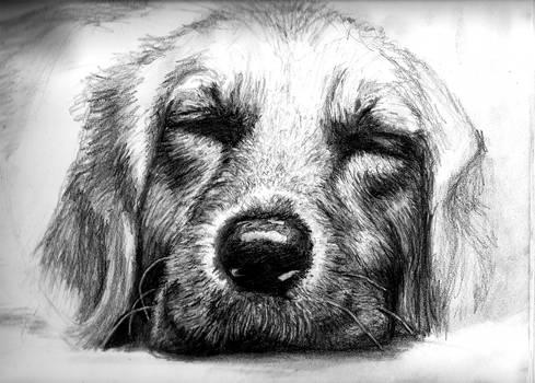 Let Sleeping Dogs Lie - In Progress