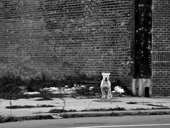 Detroit Pit bull by inviziblezero