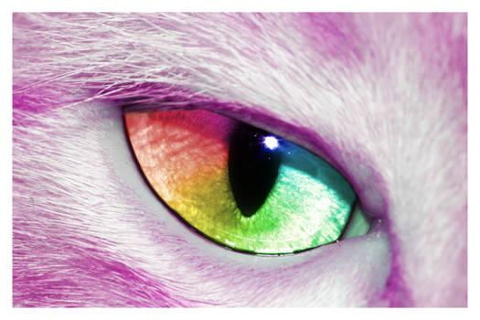 Felis Spectrus