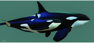 Orca Mum and Calf :: Lunar Bay and Two Stars by DrowElfMorwen