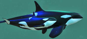 Orca Mum and Calf :: Lunar Bay and Two Stars