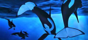 Sea Dancers by DrowElfMorwen
